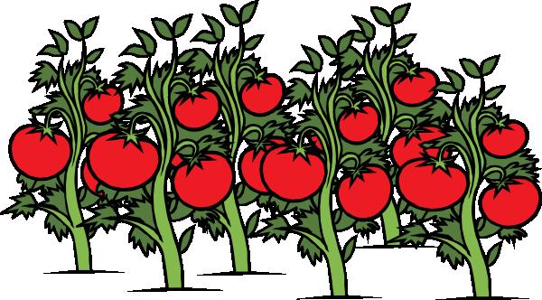 image free library Tomato Garden Clipart