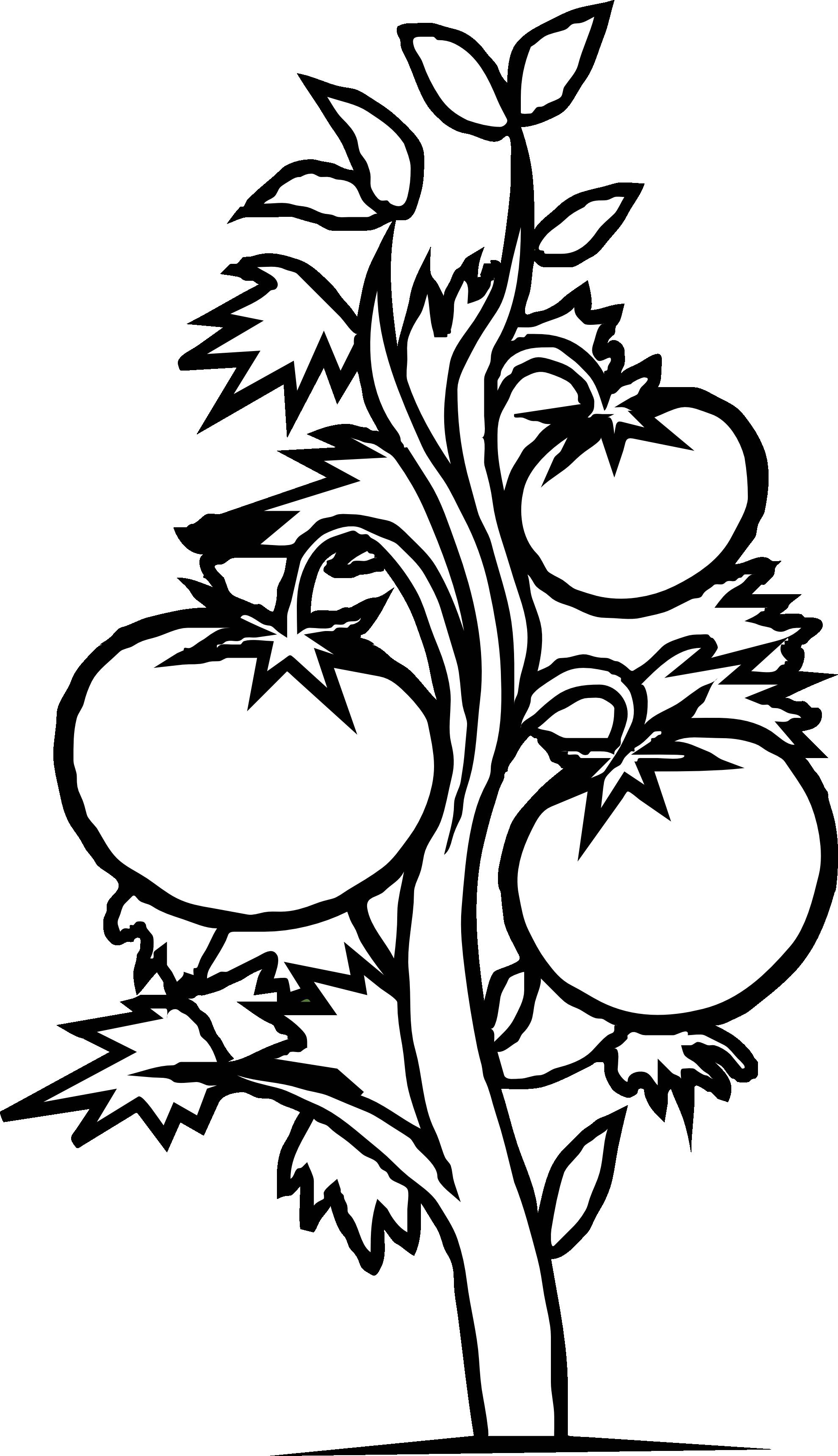 banner freeuse download Plants Clipart minimalist