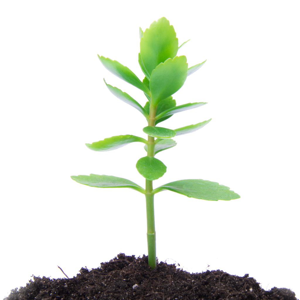 image black and white Soil Clipart little plant