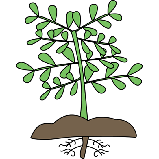jpg library With roots mockingbird nursery. Plant clipart
