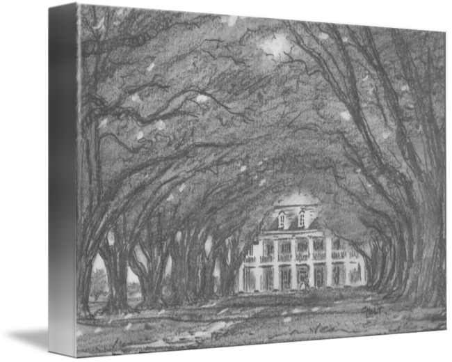 graphic transparent library Oak Alley Plantation by Chris Holt