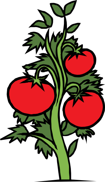 image freeuse download Tomato plant clip art. Planting clipart.