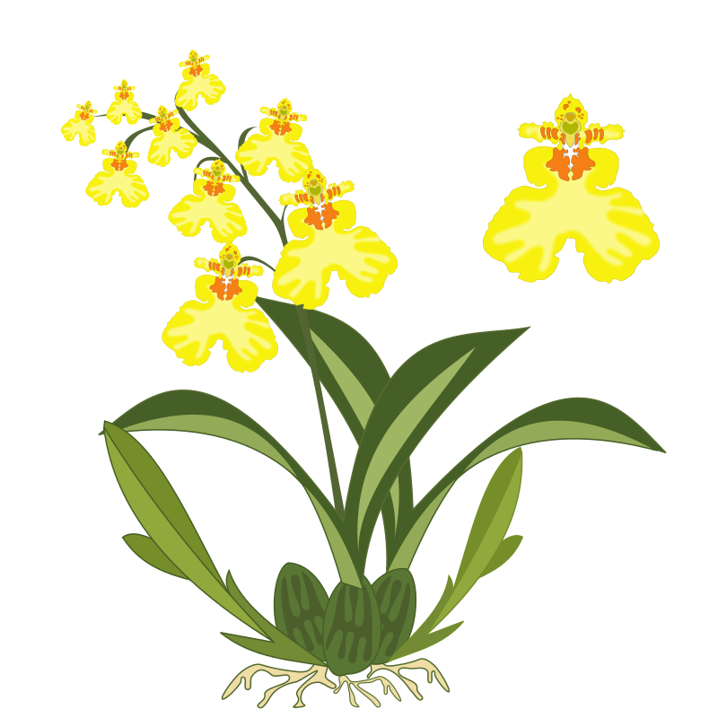 picture free Planting clipart. Orchids clipground free.