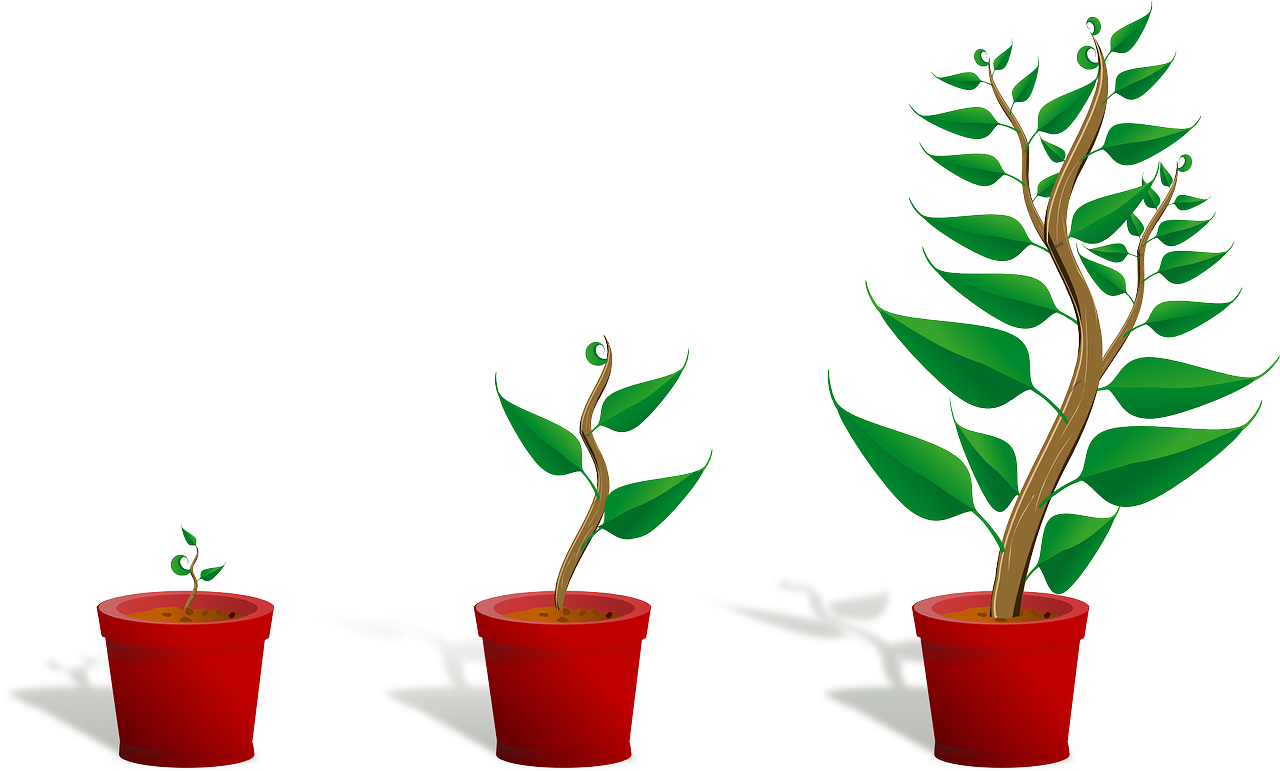 svg library download Growing Hibiscus Plants