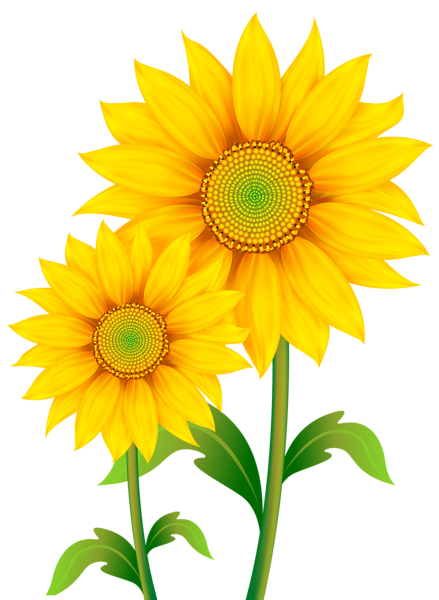 vector library library Transparent Sunflowers Clipart PNG Image