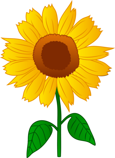 vector royalty free Sunflowers clipart colorful. Pretty golden sunflower flower.
