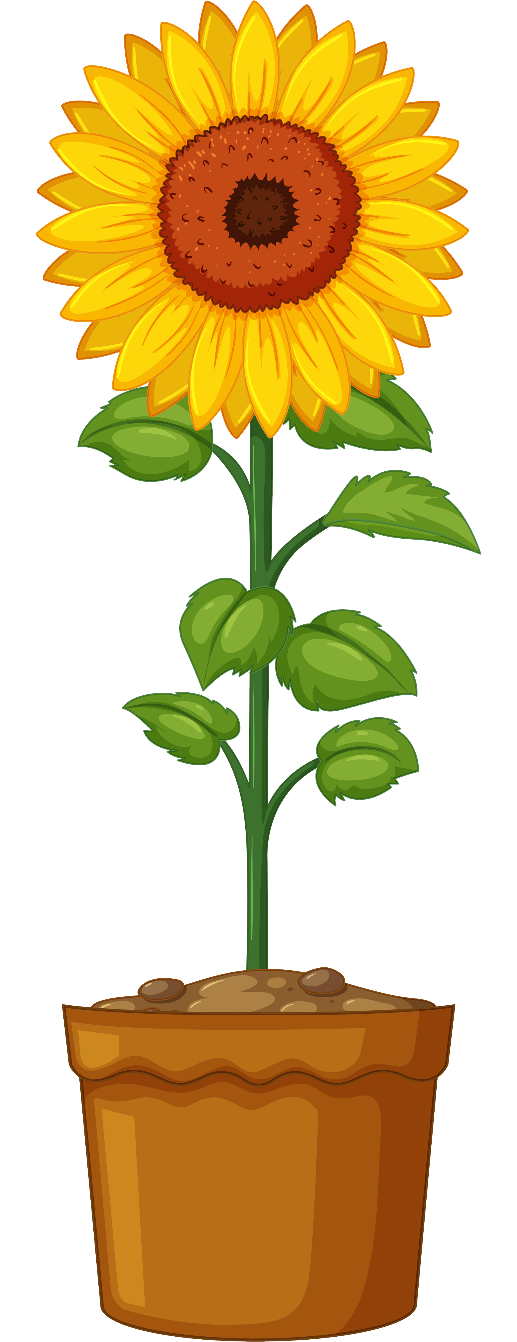 banner free download Sprout clipart sunflower stem. Britton planting lenawee district