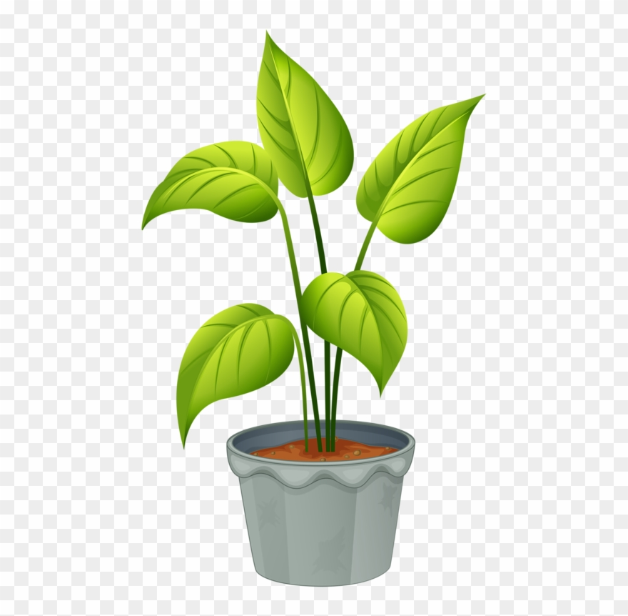 picture freeuse download Green home plant flowering. Plants clipart