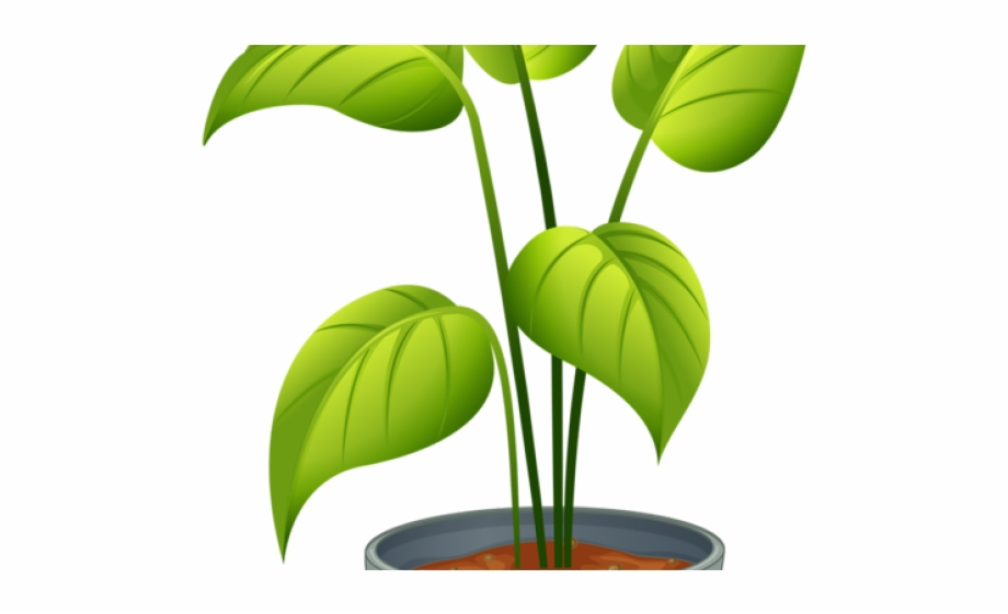 clipart freeuse download Plants clipart. Pot plant topiary non