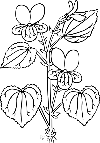 clip transparent download Plants clipart black and white.  collection of parts