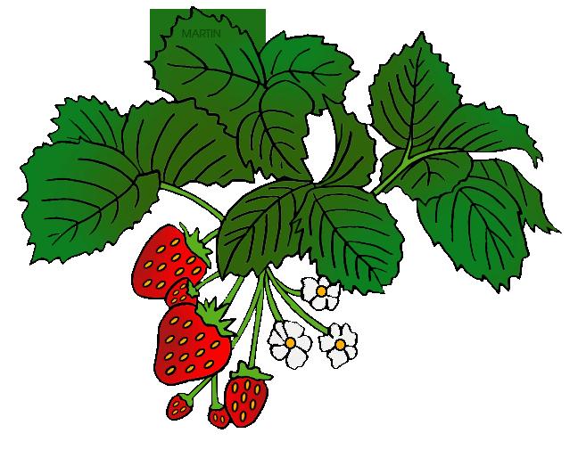 clipart transparent download Plants Clipart strawberry