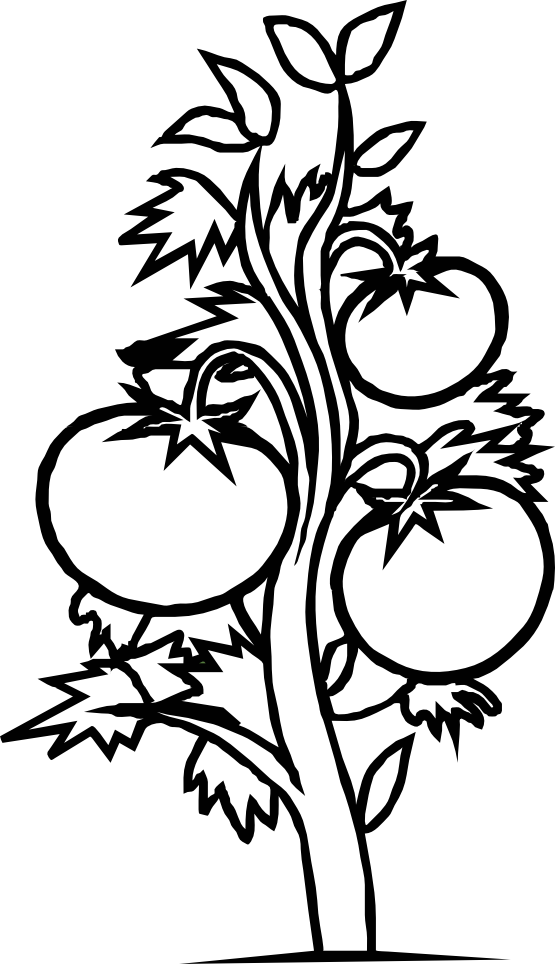 clip art free Plant Drawing Black And White at GetDrawings