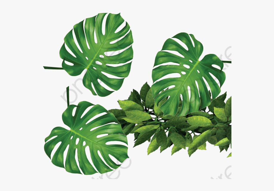 jpg Tropical green leaves . Plants transparent