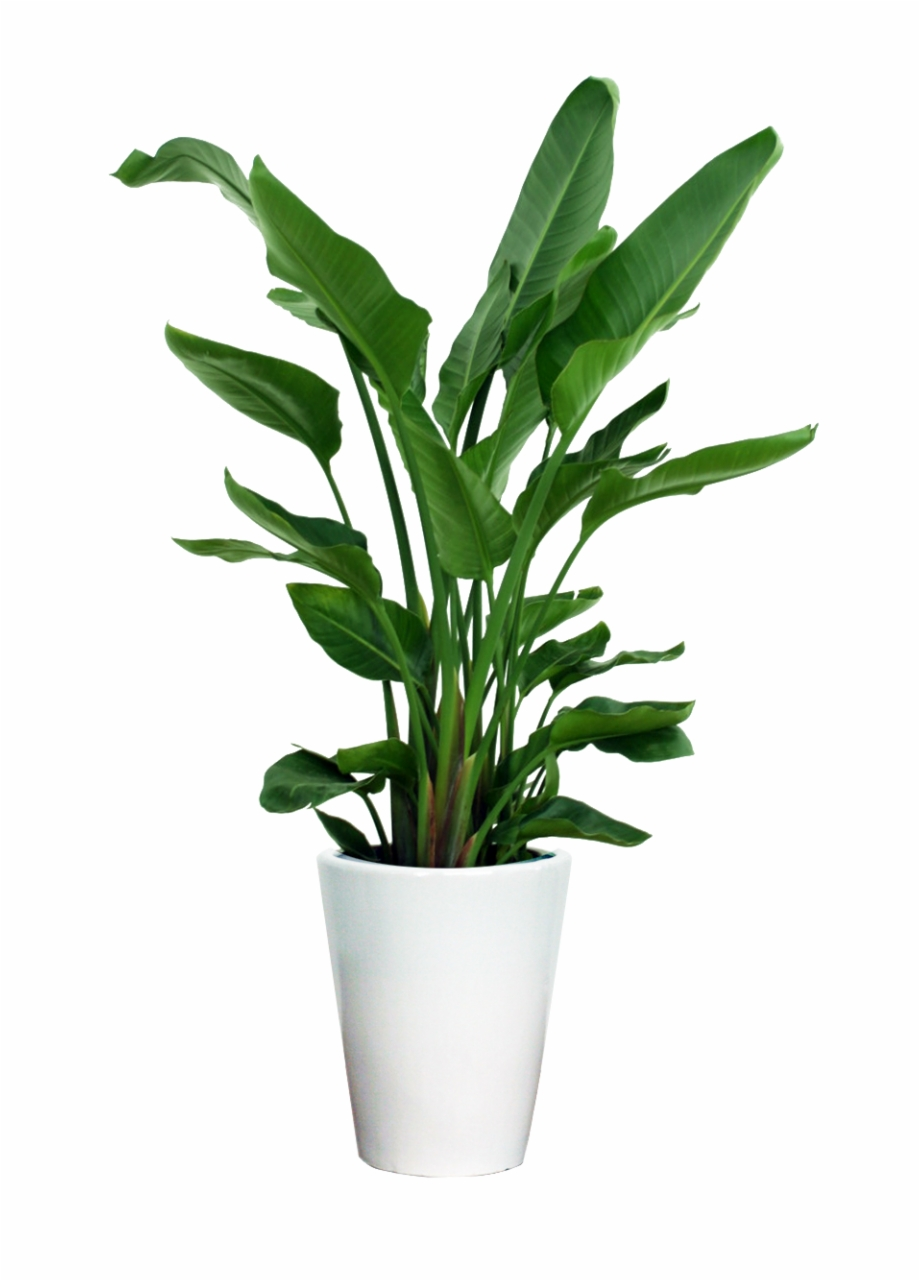 png black and white stock Plants transparent. Download for free png