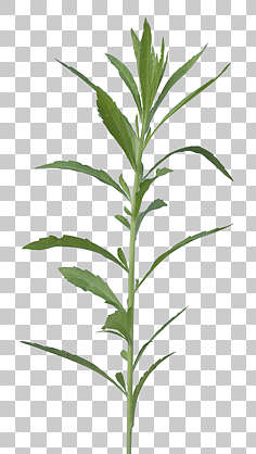 svg freeuse stock Natureplants free background texture. Plants transparent