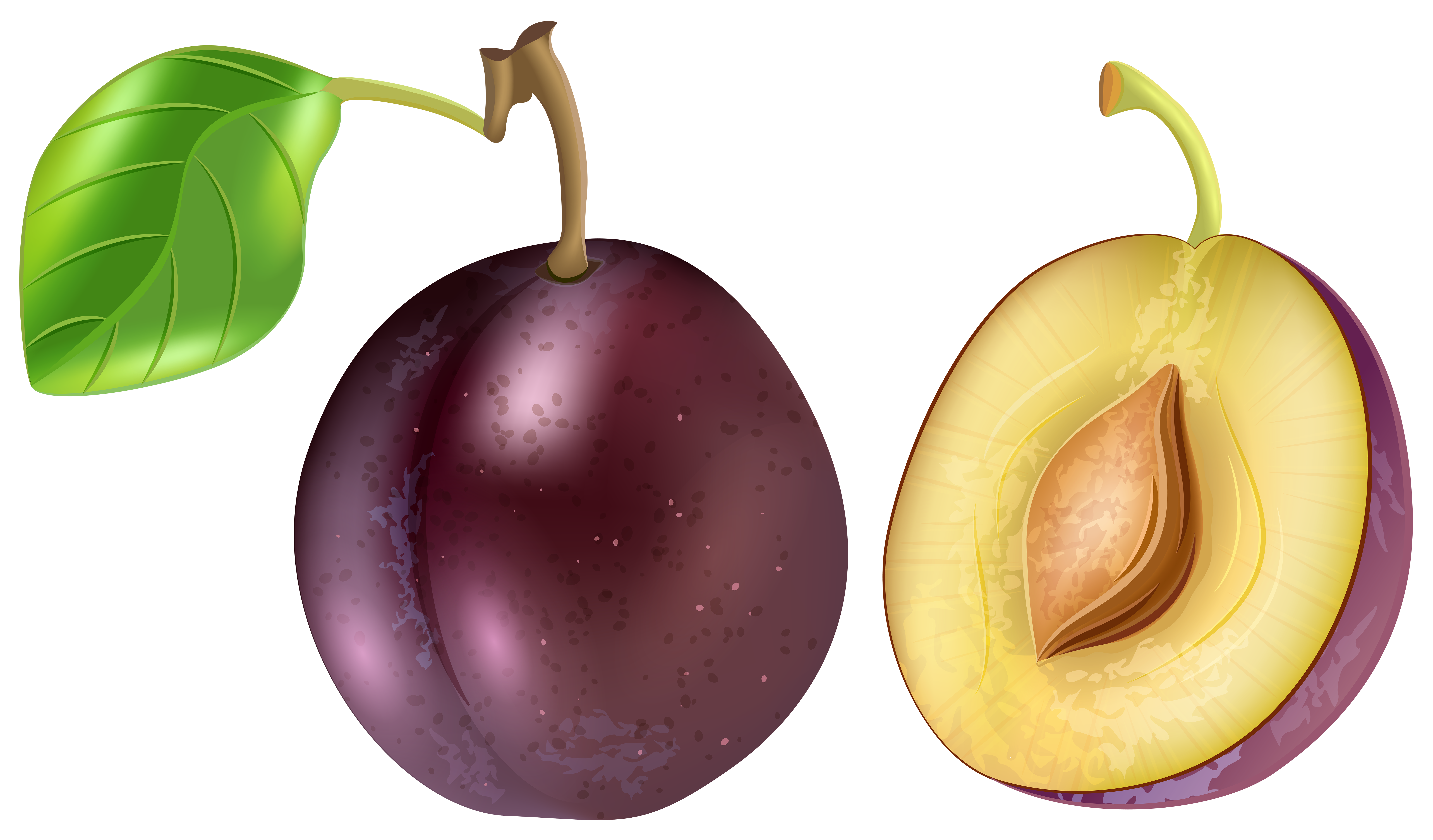 vector royalty free library Png clip art image. Fruit transparent plum