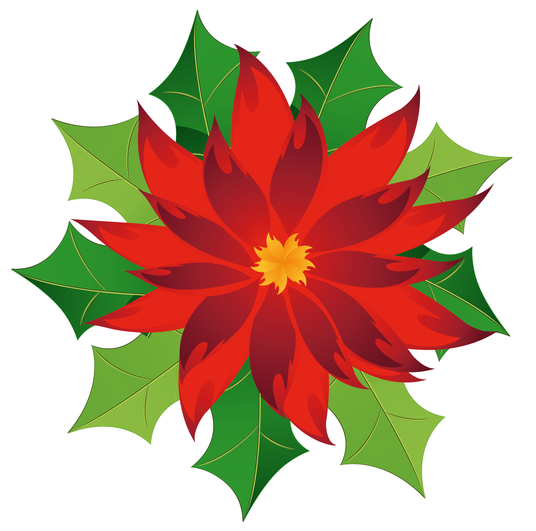 royalty free download Free cliparts download clip. Poinsettias clipart.