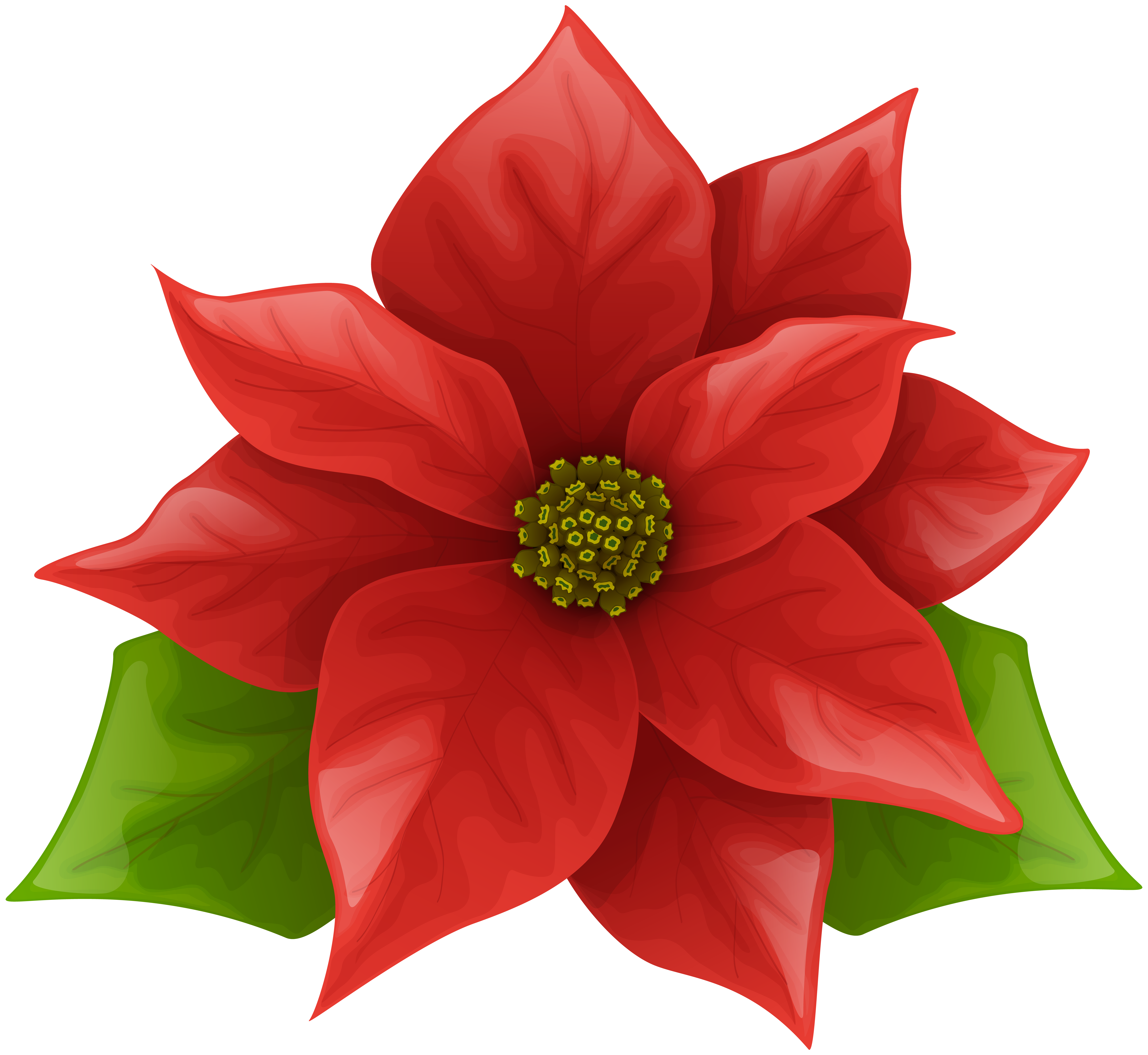 clip freeuse stock Christmas poinsettia png clip. Poinsettias clipart.