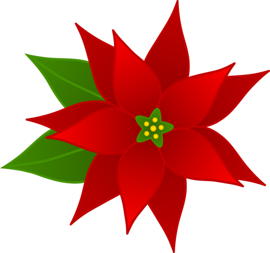 vector transparent Red Christmas Poinsettia