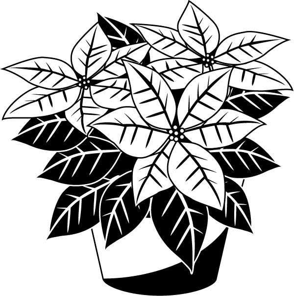 jpg royalty free stock Poinsettia clipart black and white.  collection of free