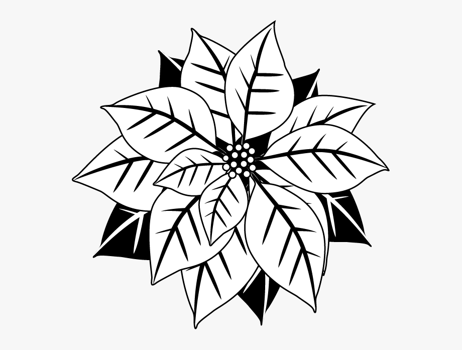 image black and white library Poinsettia clipart black and white. By christopher