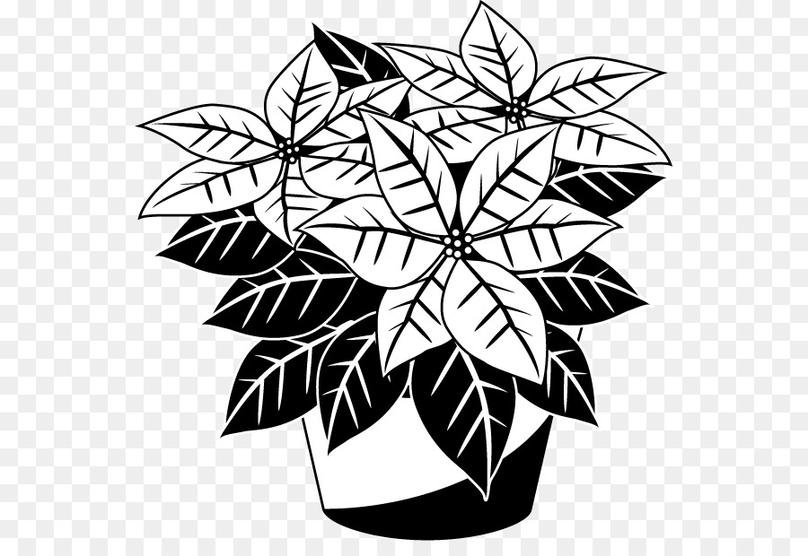 jpg royalty free library Poinsettia clipart black and white. Flower drawing plant