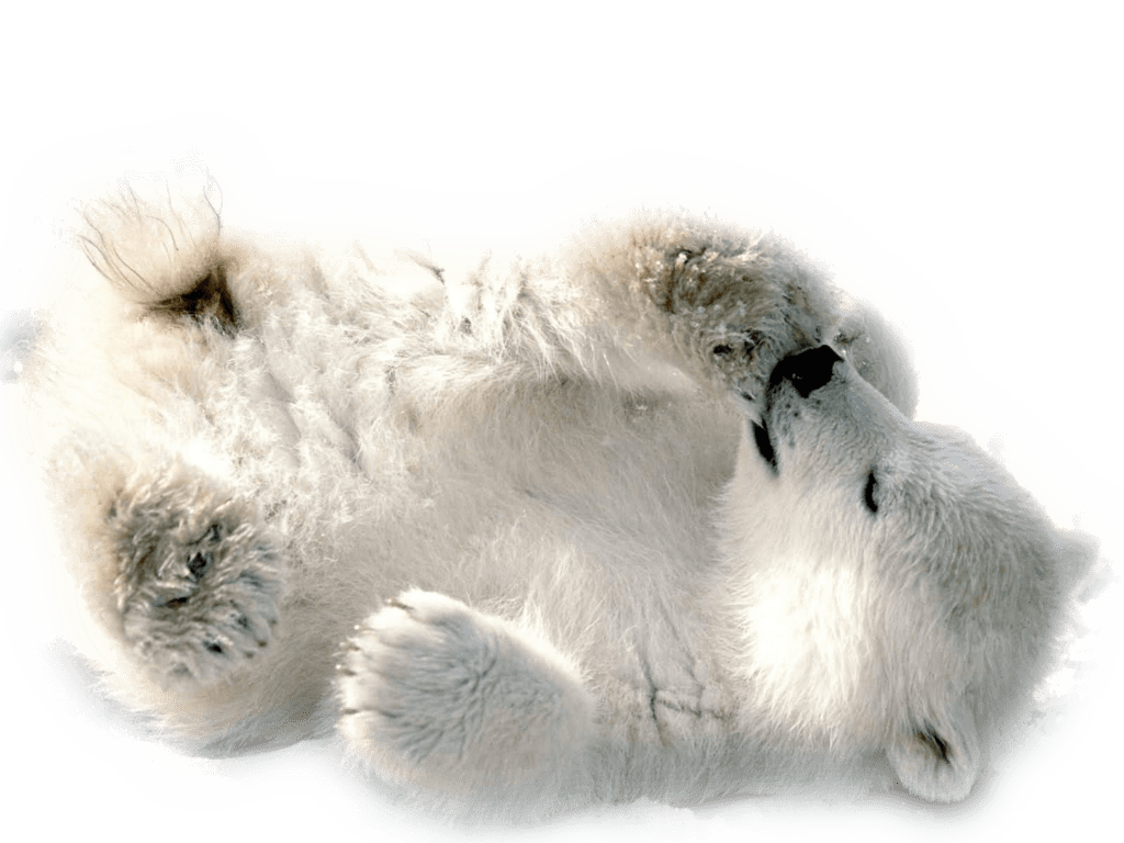 graphic transparent download Polar bear clipart free. Baby playing transparent png
