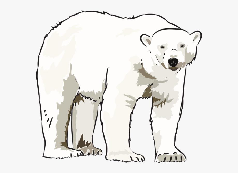 svg library Polar clipart. Art bear kid clip.