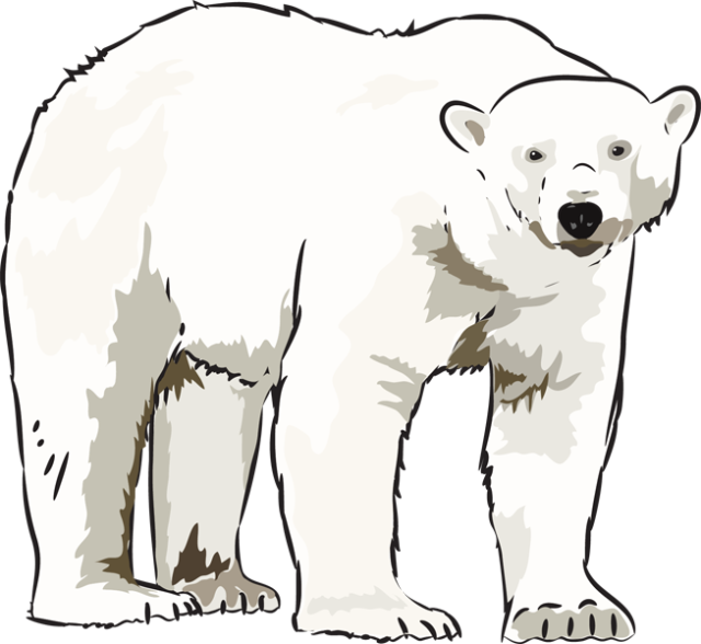 freeuse library standing polar bear clipart #57902591