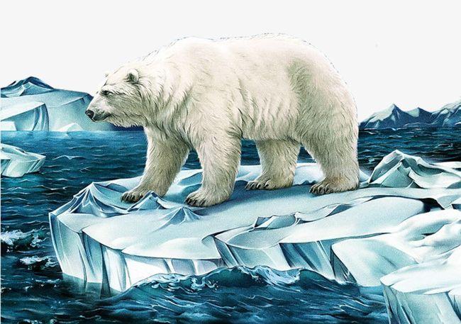 royalty free library Bear png animal arctic. Polar clipart glacier