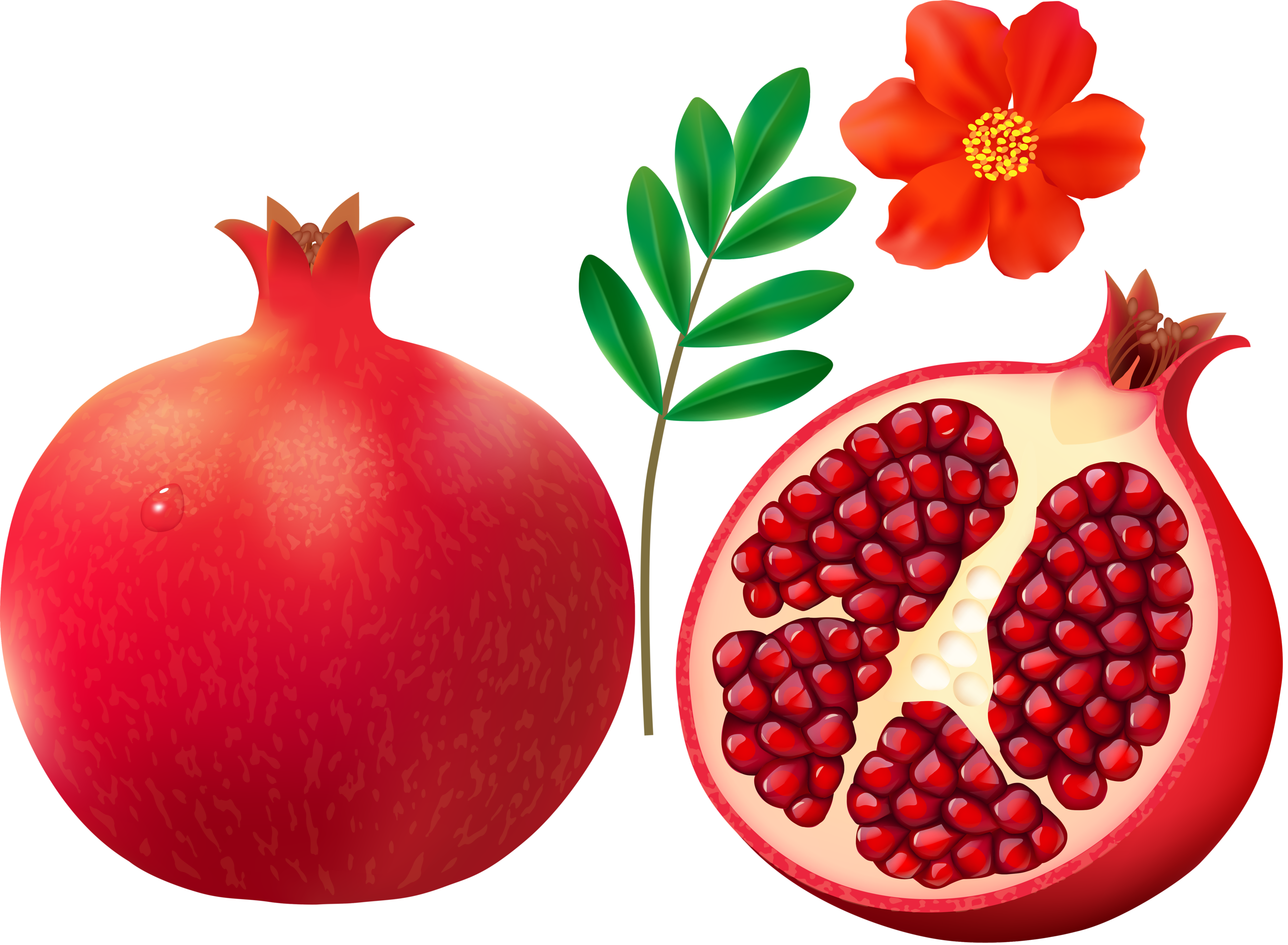 picture On white background png. Pomegranate clipart.