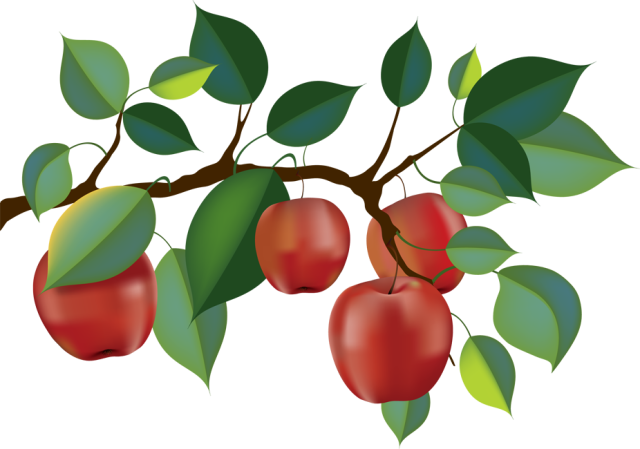 jpg transparent library Apple Orchard Fruit picking Branch Clip art
