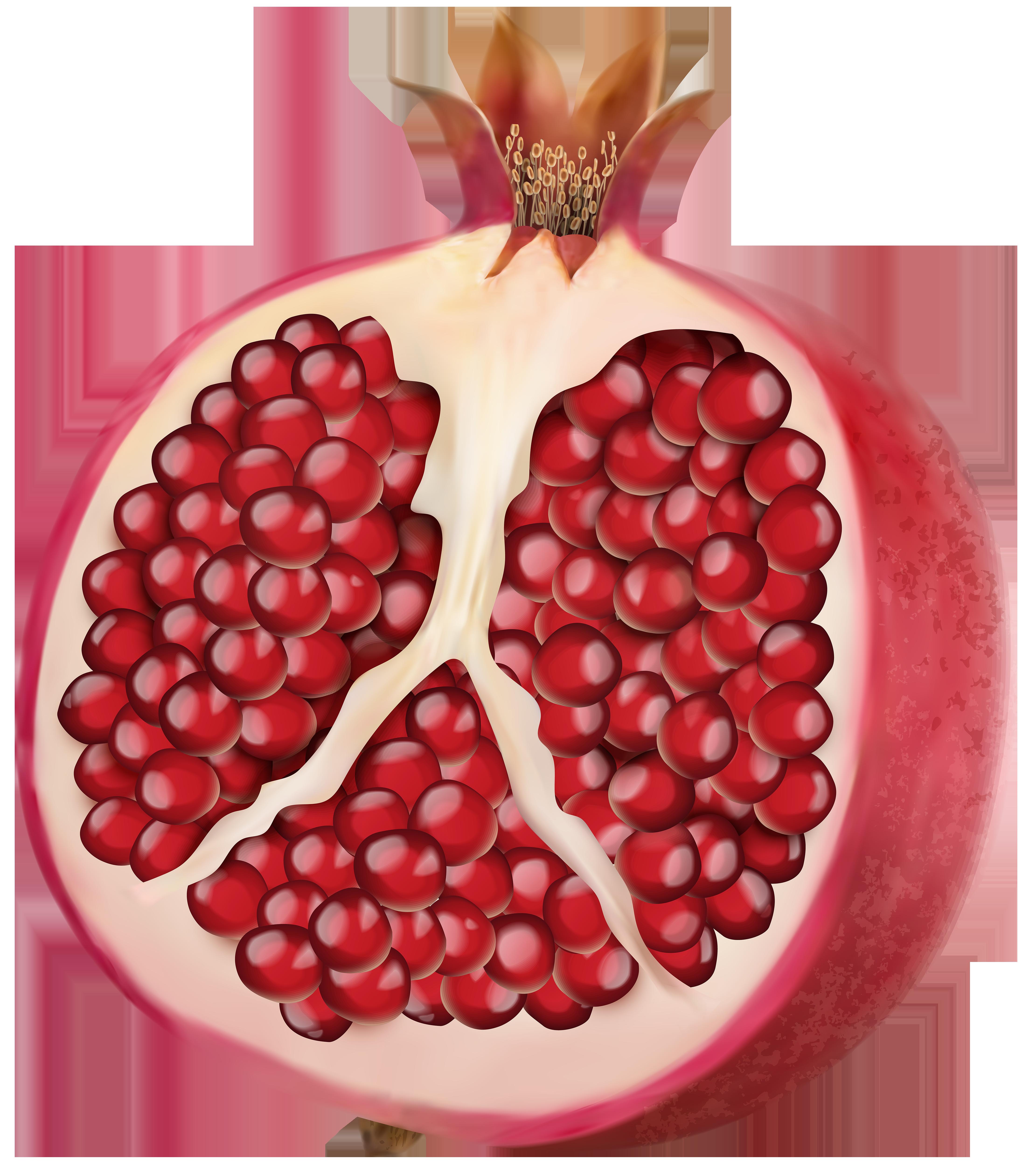 vector transparent stock Pomegranate clipart pomegranate fruit. Png clip art image