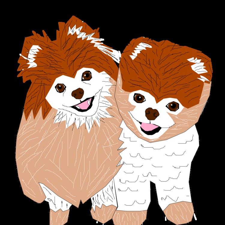 jpg freeuse library Dog breed puppy boo. Pomeranian vector