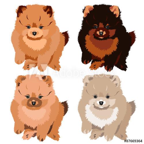 image transparent library Illustration spitz puppy colors. Pomeranian vector dog