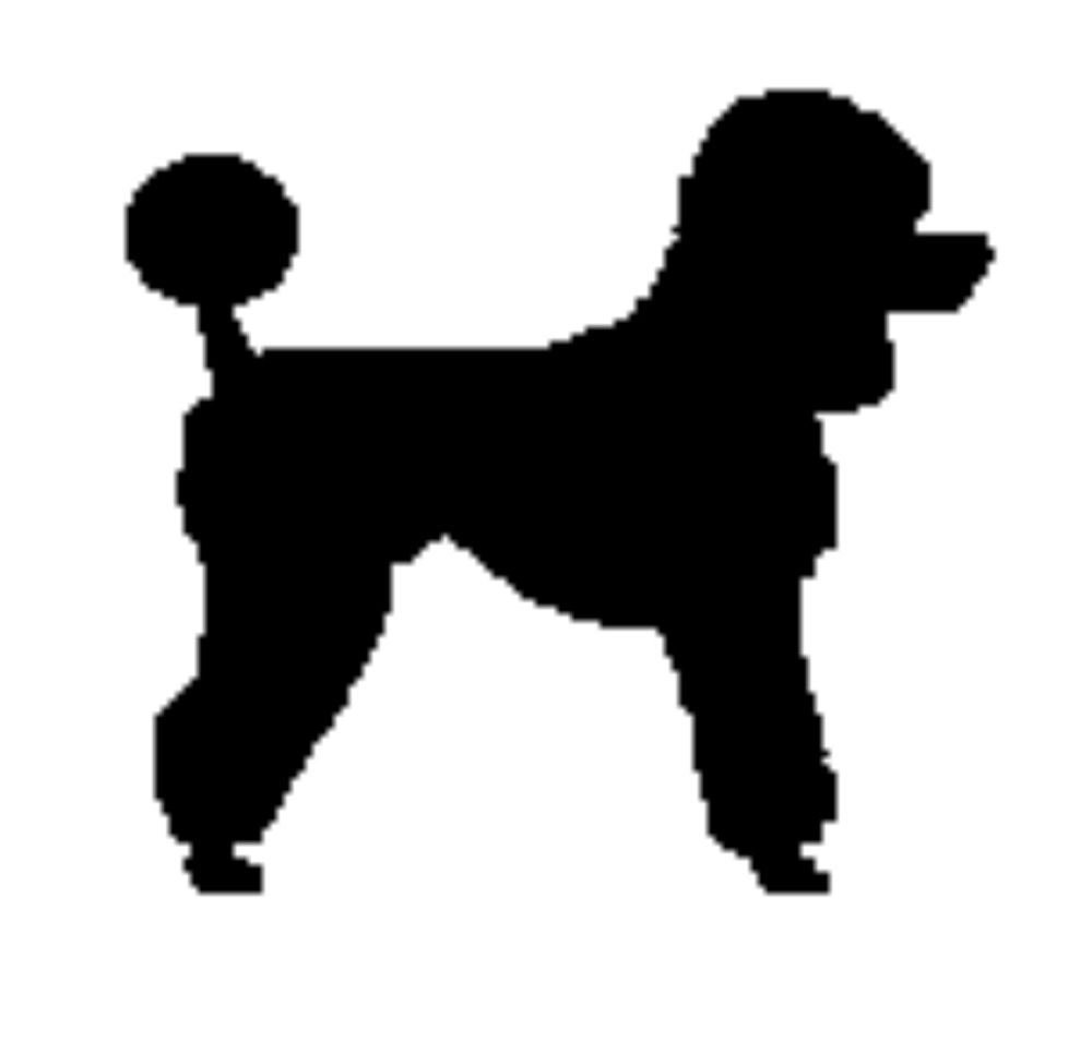 image stock Poodle clipart.  x animated clip.
