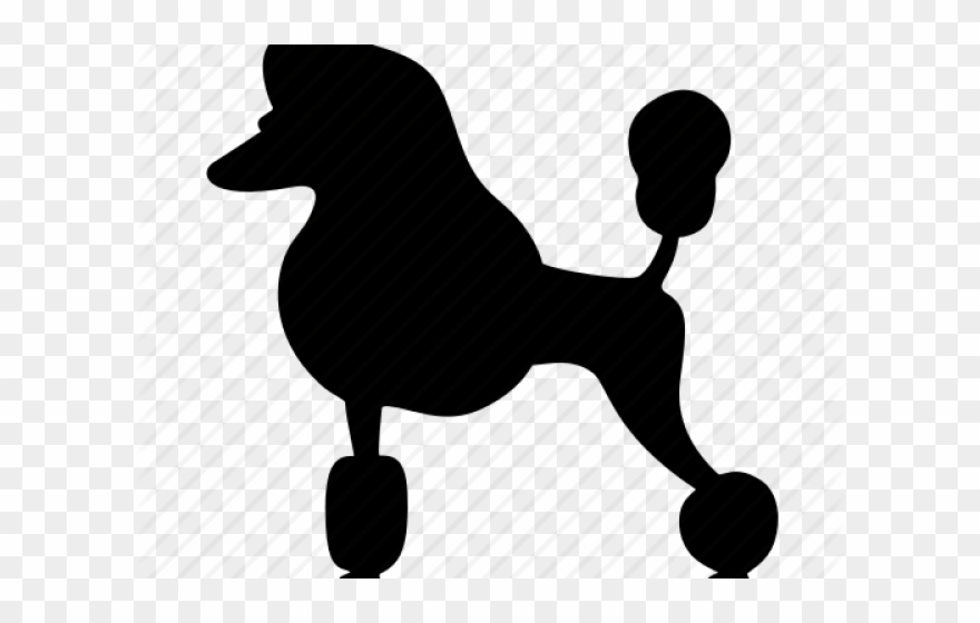 clipart black and white library Transparent miniature png download. Poodle clipart.