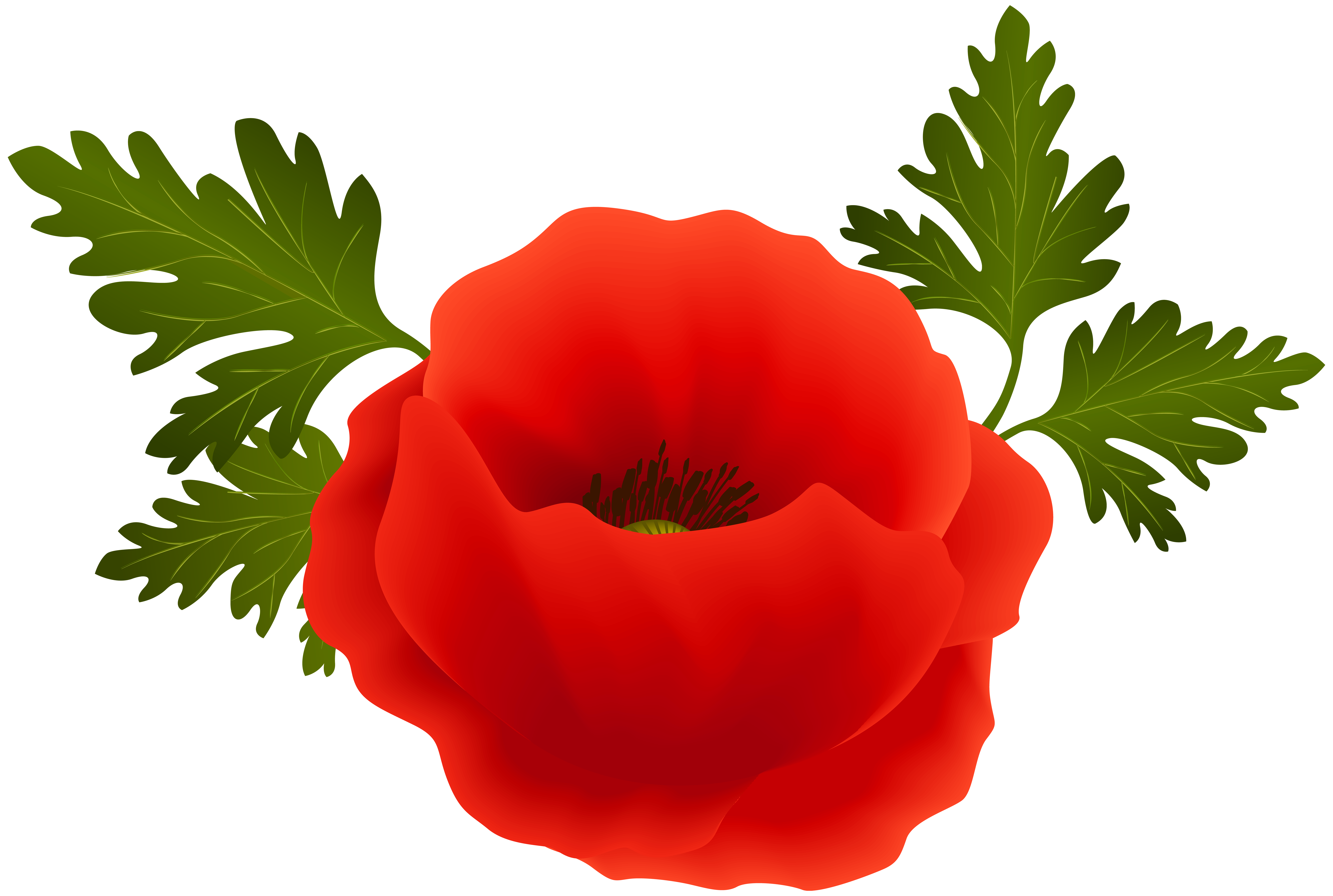 clipart library library Png clip art image. Poppy clipart
