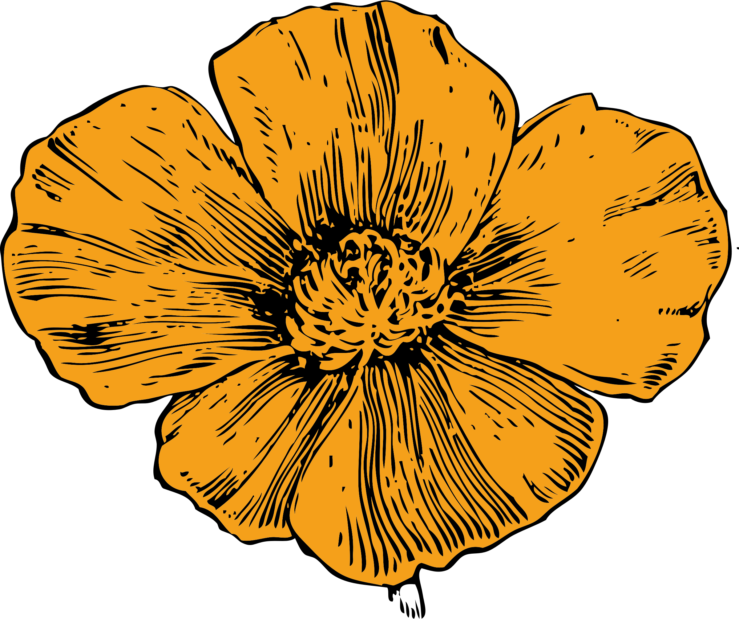 vector freeuse library California big image png. Poppy clipart