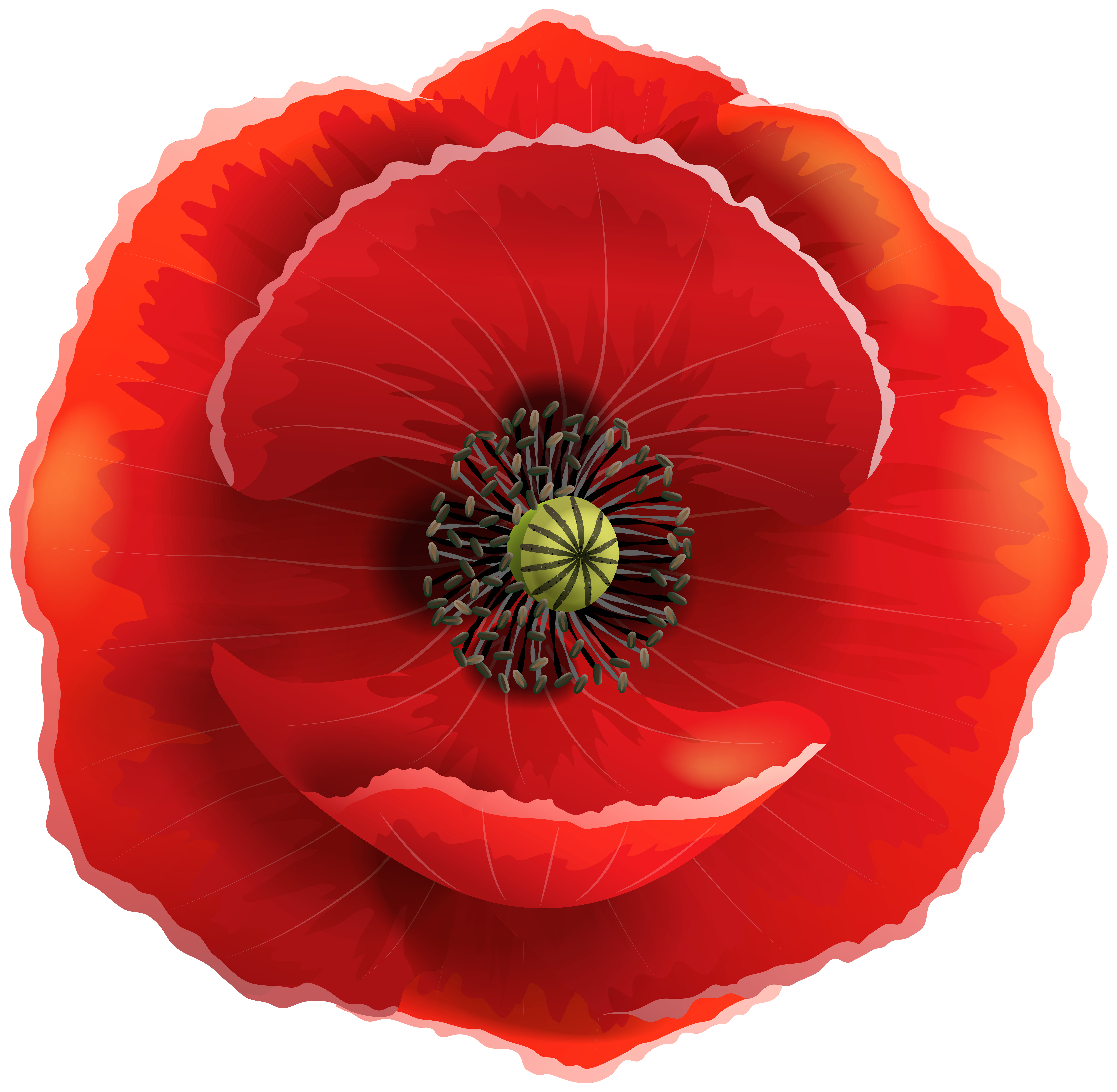 vector black and white Poppy clipart. Transparent png clip art