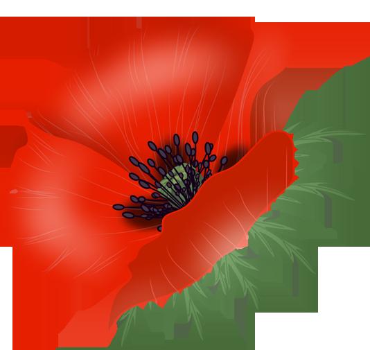 clip download Flowers flower designes pinterest. Poppy vector.