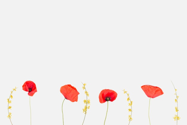 picture royalty free Poppy vector. Vectors photos and psd
