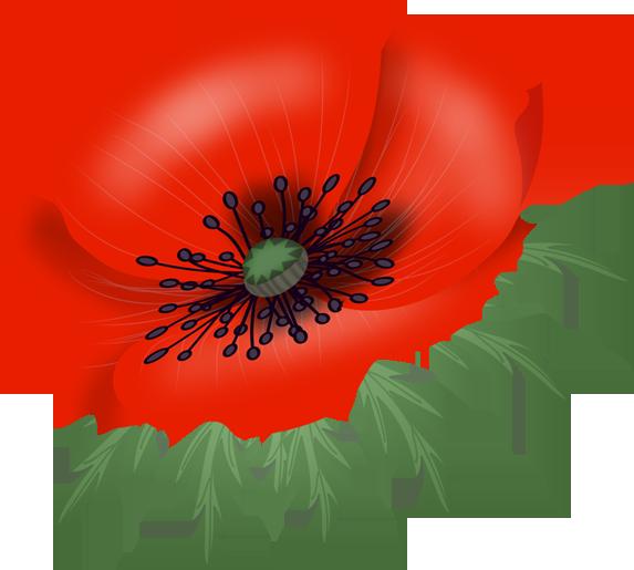 banner library download Poppy vector. Flowers malowanki pinterest decoupage.