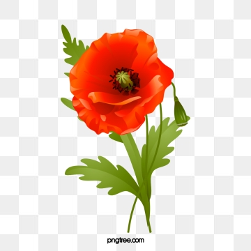 graphic Png psd and clipart. Poppy vector