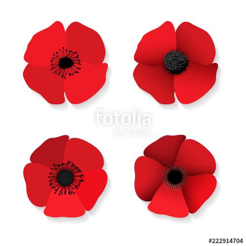 banner Poppy vector. Red flower stock image.