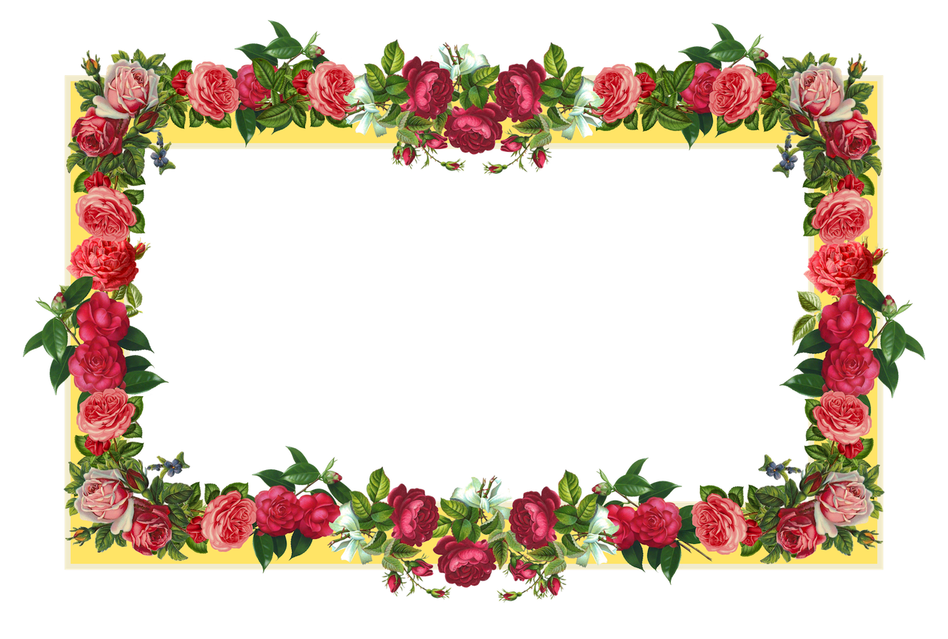 png free library Rose flower png transparentpng. Powerpoint clipart borders