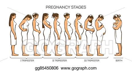 vector transparent library Stock illustration women stages. Pregnancy clipart pregnancy stage
