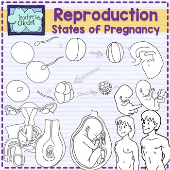 svg black and white stock Pregnancy clipart pregnancy stage. Human reproductive system and