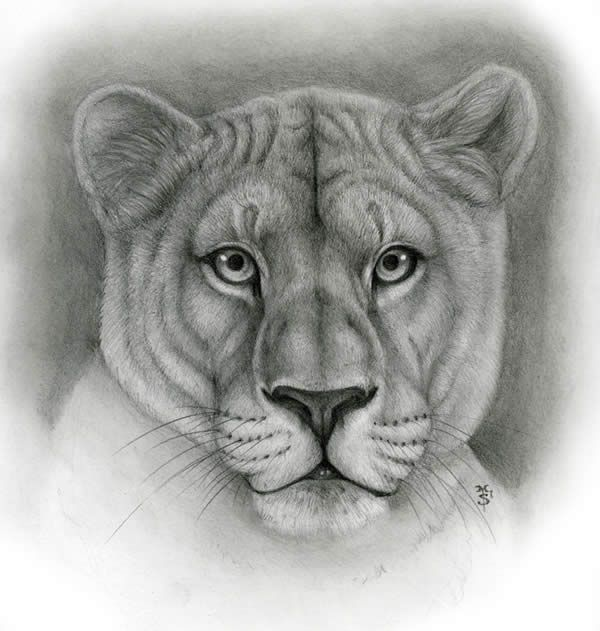 graphic royalty free download Professional drawing. Drawings photo realistic .