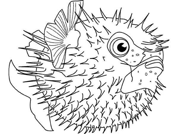 banner library library Puffer Fish